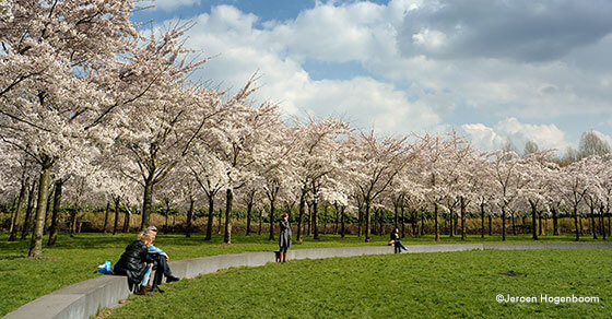 Amsterdamse Bos - Jeroen Hogenboom